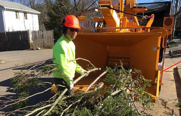 tree-removal-canton-milton-stoughton-easton-ma-0450